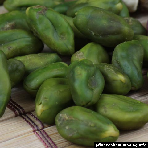 grüne pistazien