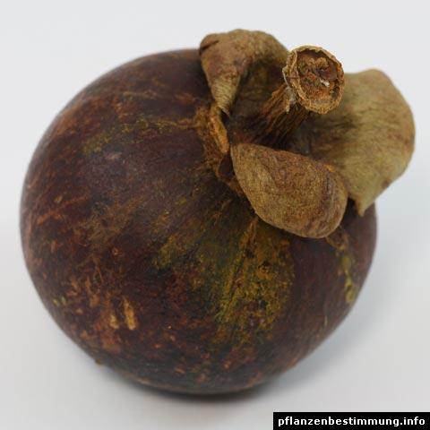 mangostane