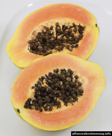 Papayafrucht
