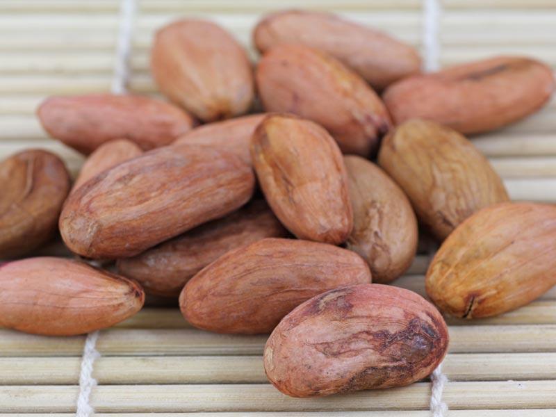 Kakaobohnen