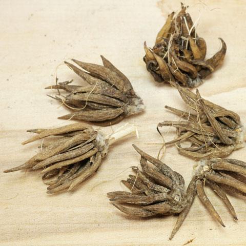 Ranunculus-asiaticus-480