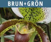 Brun-groen