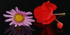 Röd & rosa